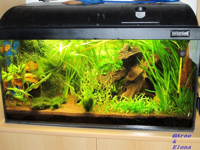 sand oder kies neueinrichtung aquarium forum. Black Bedroom Furniture Sets. Home Design Ideas