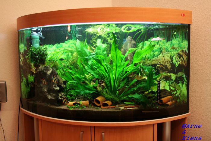 Zeigt eure welsbecken seite 5 l forum for Aquarium einrichtungsideen